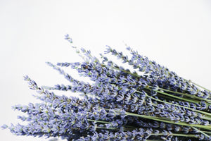 Kelso Lavender, Dried French Lavender Bouquet, Phenomenal, 18 inches, 200 stems, Close Up View