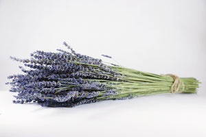 Kelso Lavender, Dried French Lavender Bouquet, Phenomenal, 18 inches, 200 stems