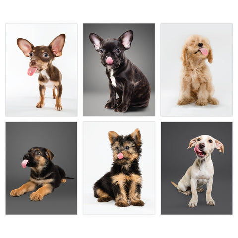 Knock Knock Lick Puppies Blank Notecards (Small)