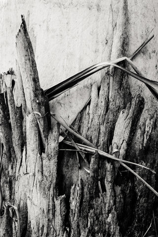 'Tree Bark' Photo Print *Limited Edition A2