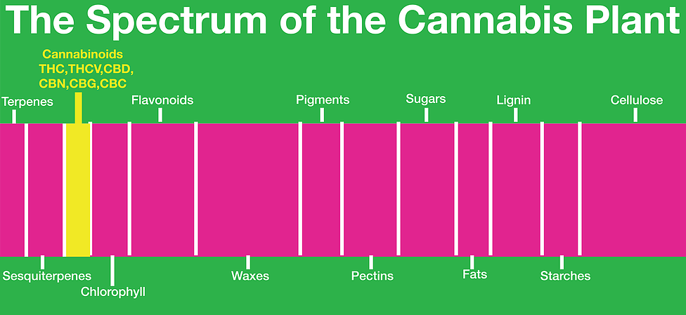The Spectrum of the Cannabis Plant