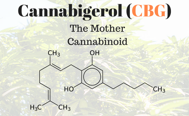 "CBG for Pets: the ""Mother"" of all Cannabinoids"