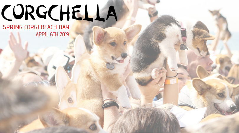 Corgchella 2019 Is Almost Here!