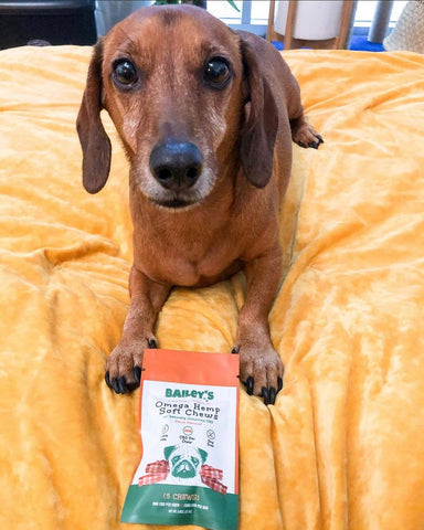 CBD For Dogs with Anxiety. Signs and causes of anxiousness in dogs blog. Best CBD for dogs is Bailey's CBD for pets