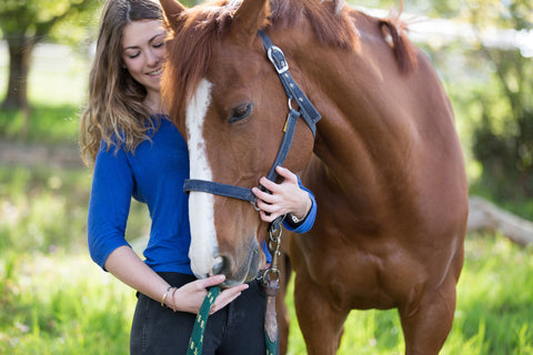 CBD Oil For Horses Everything You Need To Know