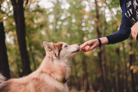 Dramamine vs CBD Oil for Dogs: What's Best for Motion Sickness? Best CBD Oil For Dogs Is Bailey's CBD For Pets