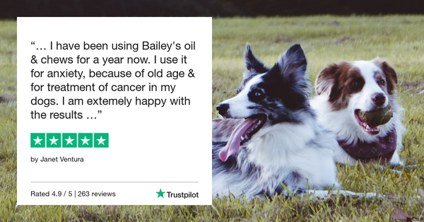 Best CBD Oil For Dogs With Motion Sickness is Bailey's CBD For Pets Veterinarian Formulated CBD Products For Dogs Made With Organically Grown Hemp Extract