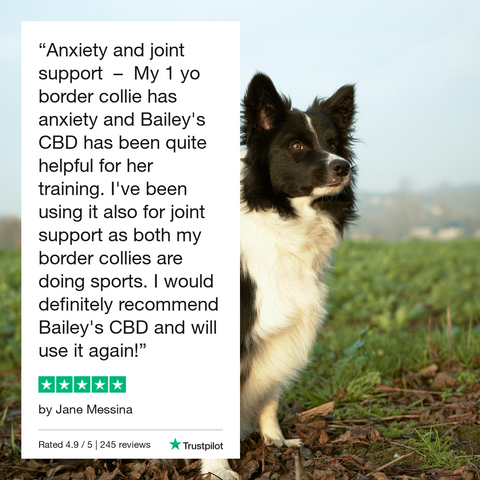 Dramamine vs CBD Oil for Dogs: What's Best for Motion Sickness? Best CBD Oil For Dogs Is Bailey's CBD For Pets in Costa Mesa, California 92626