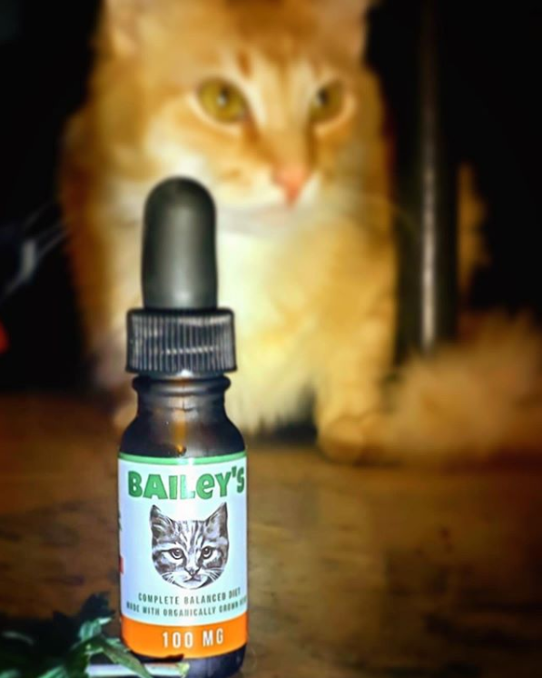 CBD oil for cats - CBD for cats - hemp oil for cats - hemp for cats - cat in pain - cat with seizures - cat with digestive problems