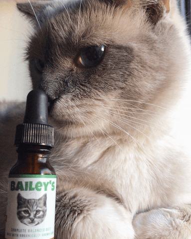 Limited Time, Limited Supply FREE 100MG CBD Oil For Cats Bottle Offer! (Just Cover S&H)