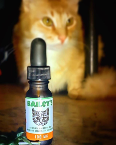 Image of Limited Time, Limited Supply FREE 100MG CBD Oil For Cats Bottle Offer! (Just Cover S&H)