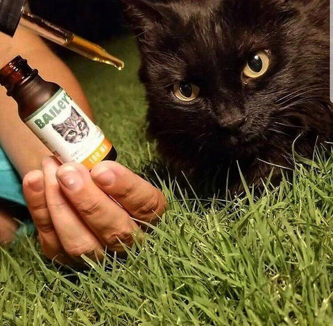 Image of Bailey's Full Spectrum Hemp Oil For Cats w/ 100MG Naturally Occurring CBD