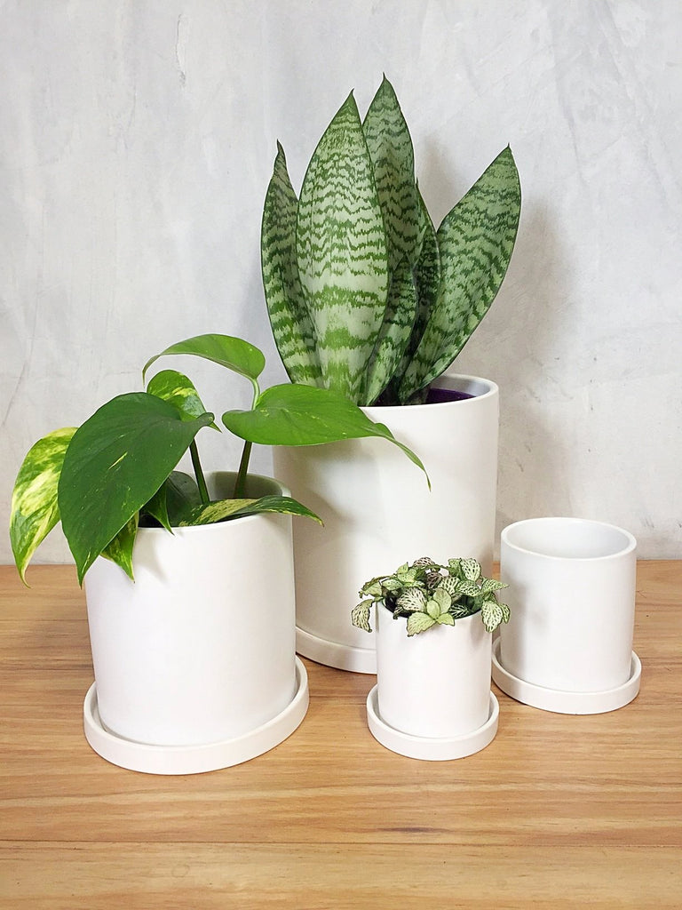 CYLINDER POT WITH SAUCER - WHITE