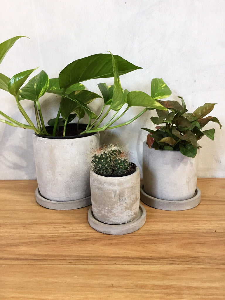 CYLINDER POT WITH SAUCER - CEMENT
