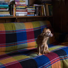 Photo of a small dog on a blanket.