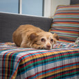 dog on plaid blanket on the couch maria canta
