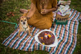 dog with birthday cake picnic blanket