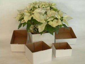6X6X5 DELIVERY BOX       100PC CASE