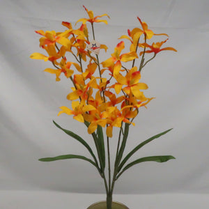 DENDROBIUM ORCHID X5 YELLOW EACH