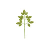 ROSE LEAF SPRAY MOSS PKG