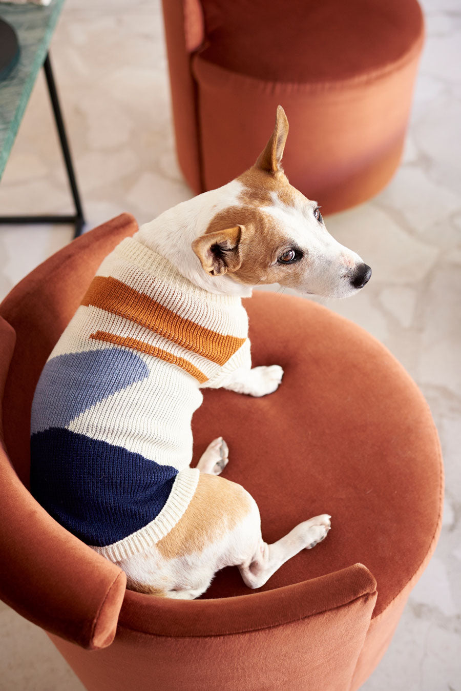 The Hayden Pet Jersey by Lucky & Lou