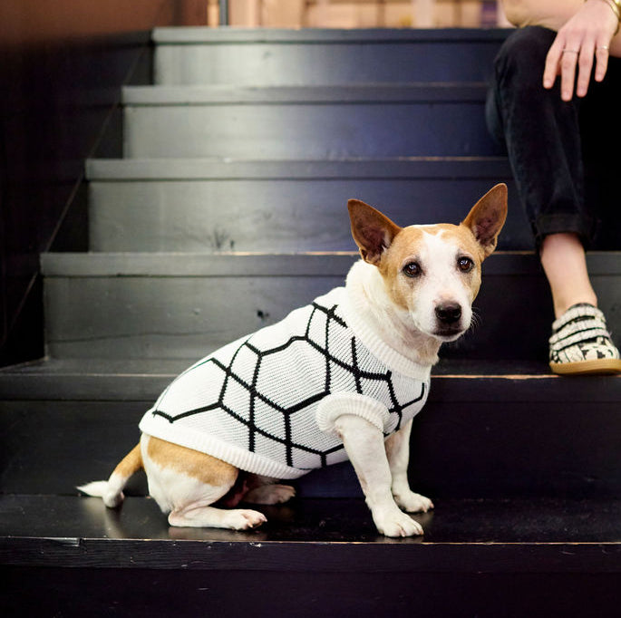 The Harper Knitted Dog Jersey by Lucky & Lou