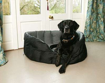 Why Labradors Deserve the Best Dog Bed