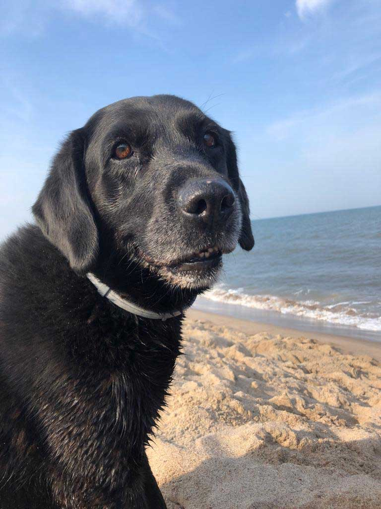 Berry's Top Five Dog Walks in Dorset