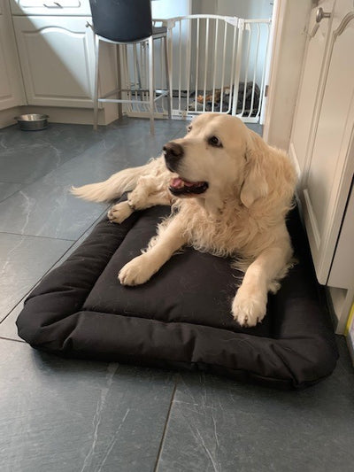 Dexter the Golden Retriever on his Country Dog Crate Pad