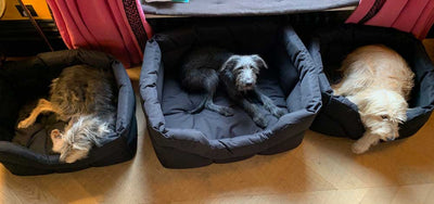 Happy Customers and Their Brand New Dog Beds