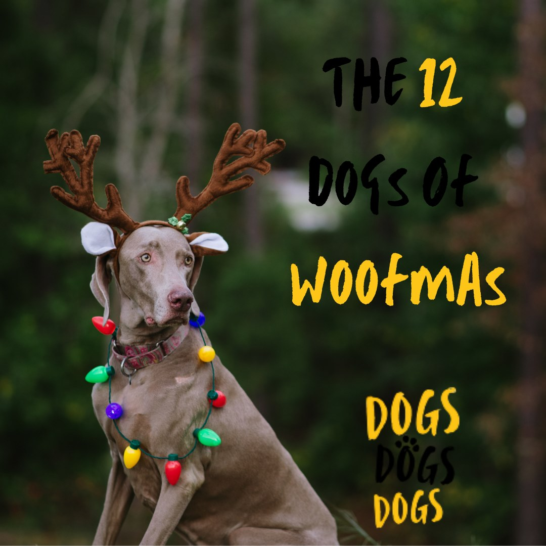 The 12 Dogs of Woofmas - Weimaraner