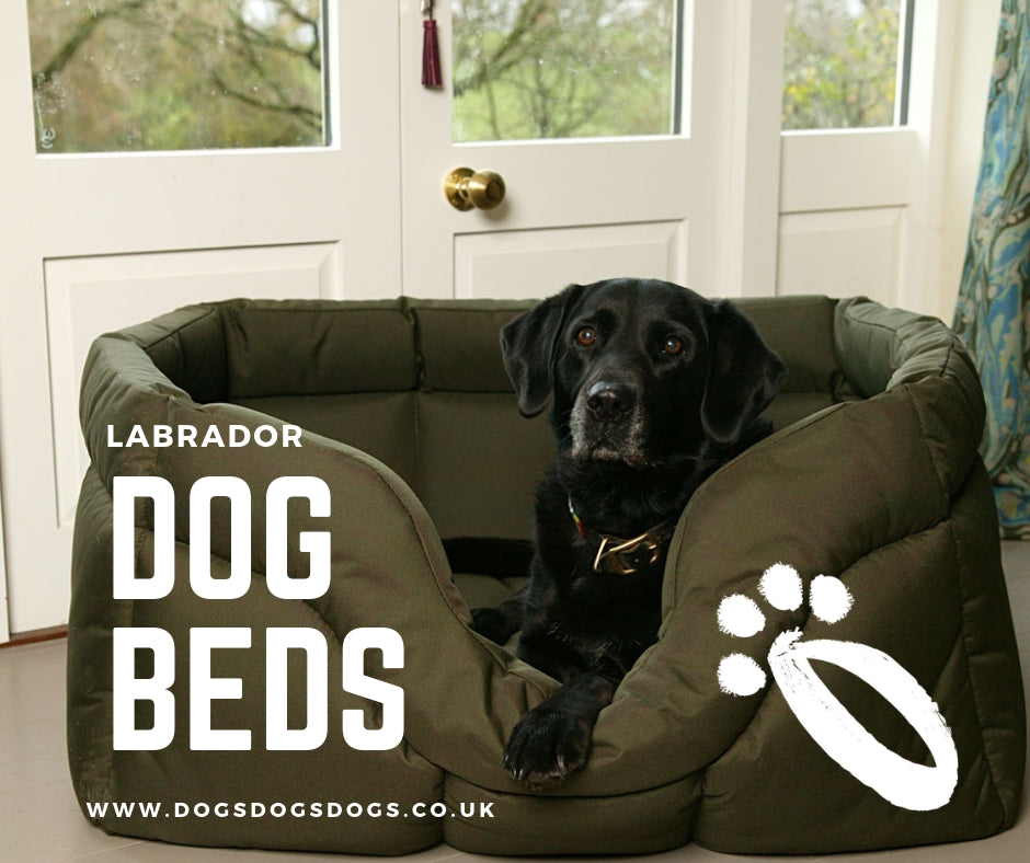How to choose the right dog bed for a Labrador