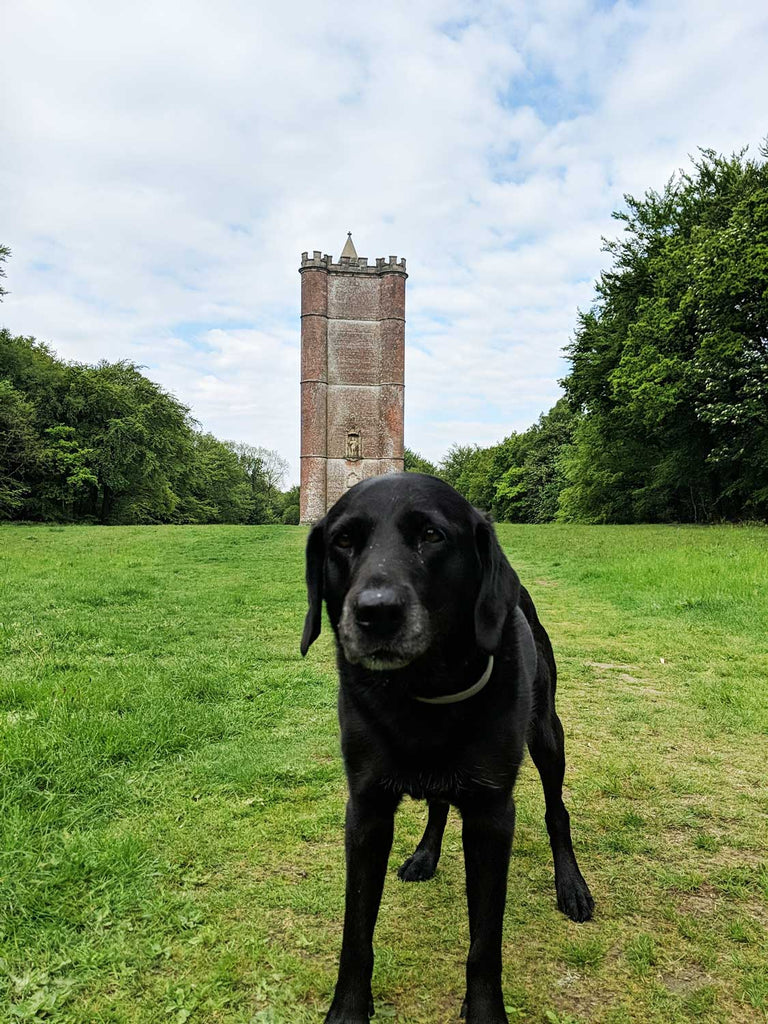 Alfreds Tower for Dog Walks