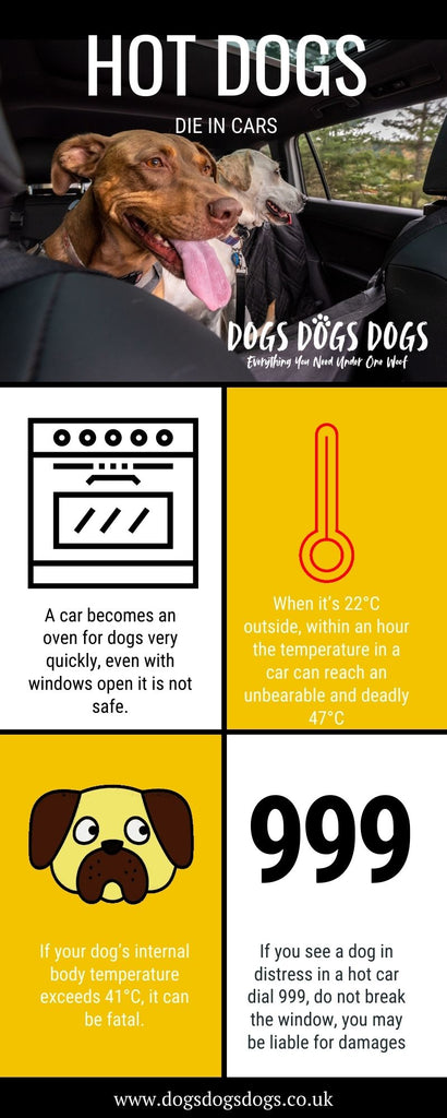 Hot dogs in cars Infographic