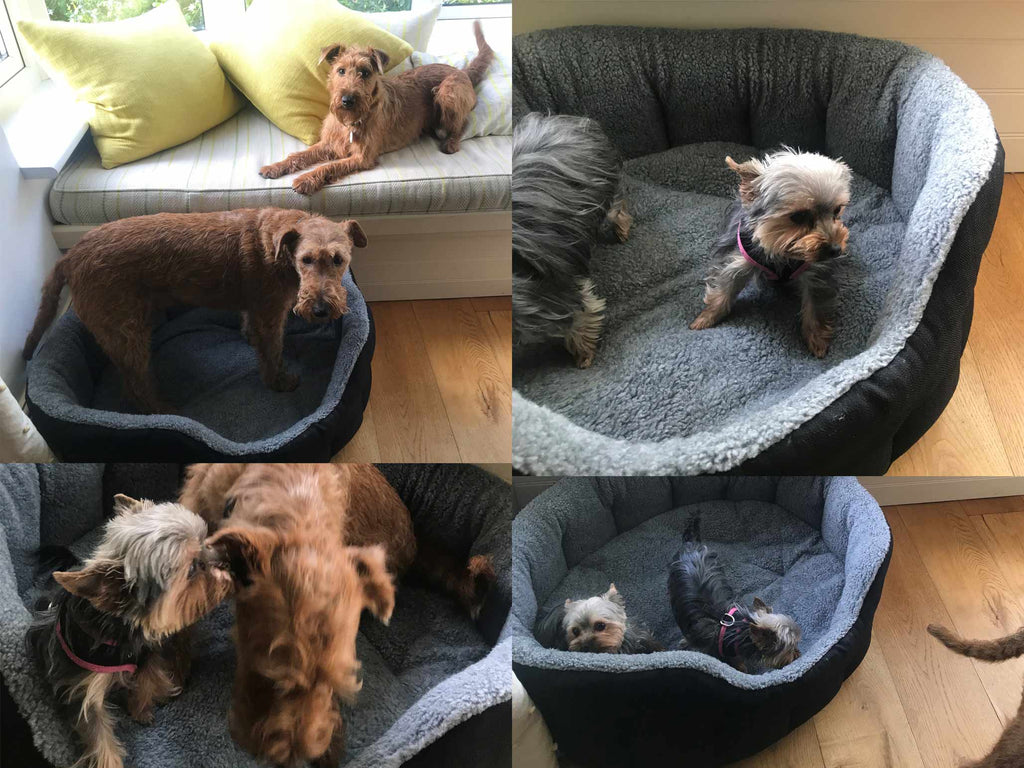 Dog beds for Hotels in Cornwall