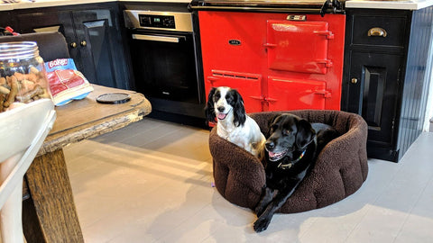 Dog bed in front of aga