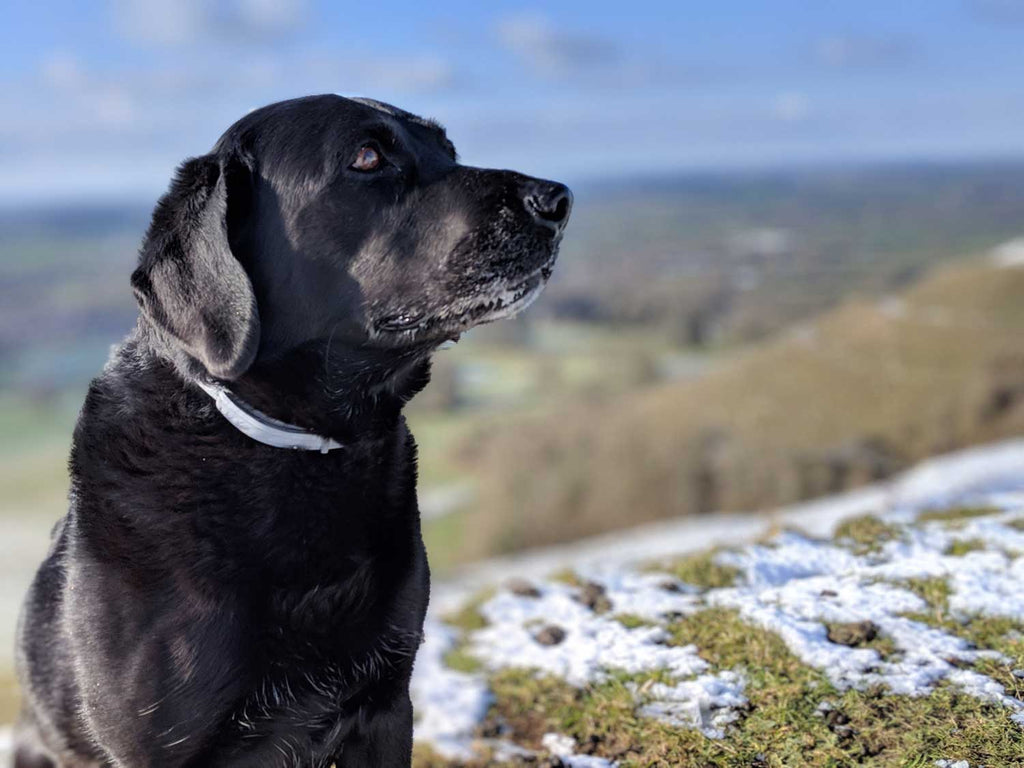 Hambledon Hill Dog Walks