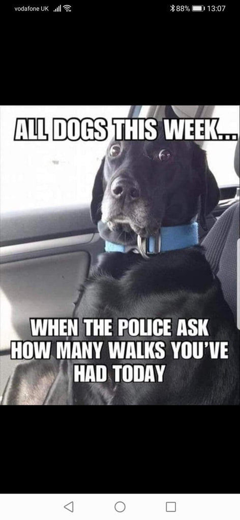 Our Favourite Lockdown Memes From Whatsapp Updated Www Dogsdogsdogs Co Uk