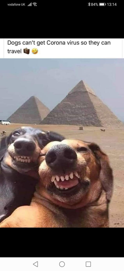 Dogs travelling to Egypt