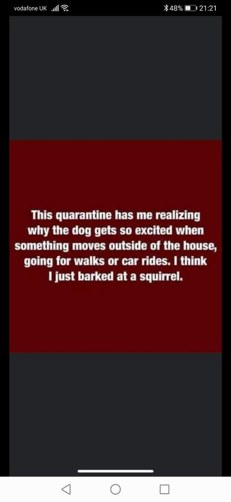 Squirrel Barking