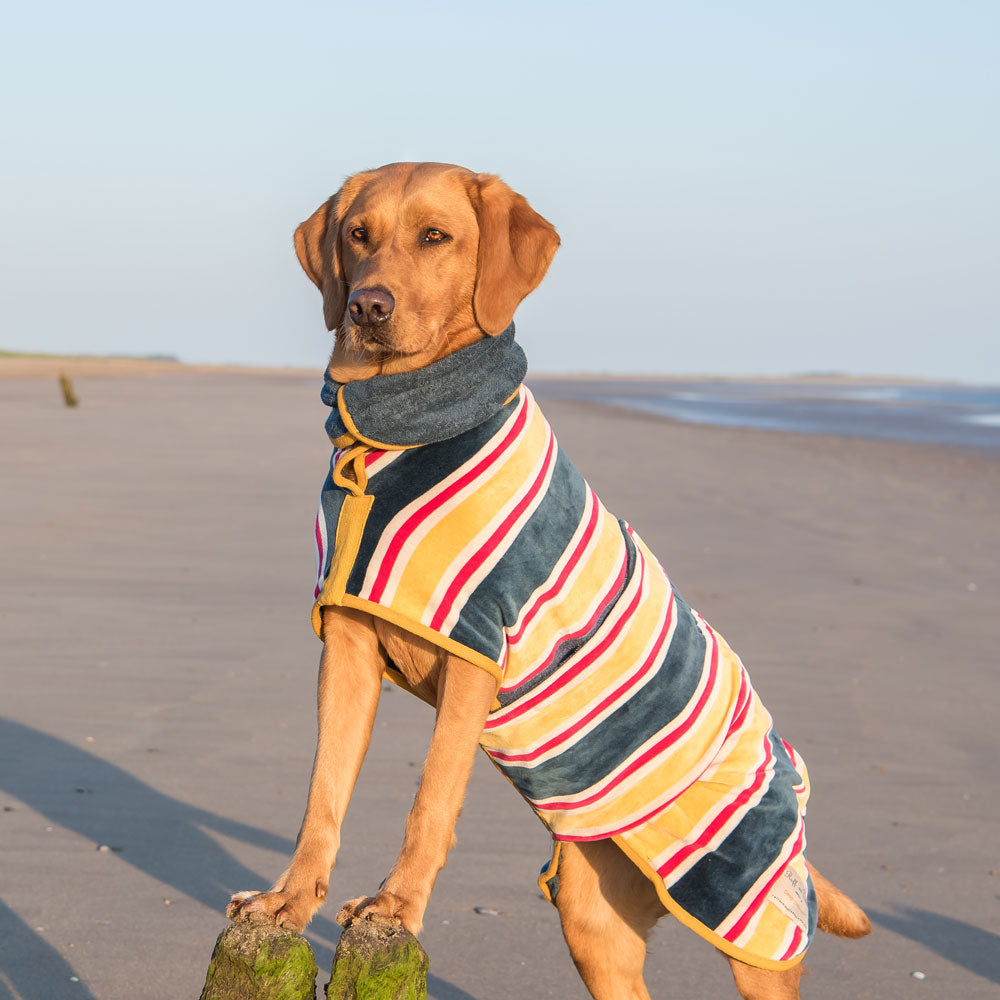 Ruff and Tumble Beach Collection Drying Coat by  Dogs Dogs Dogs