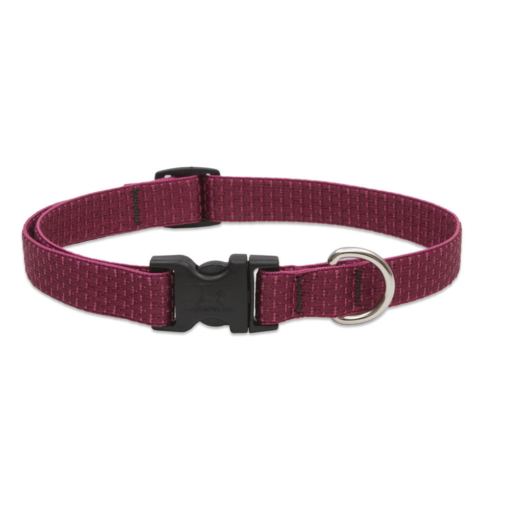 Lupine Eco Dog Collar, Animals & Pet Supplies by Dogs Dogs Dogs