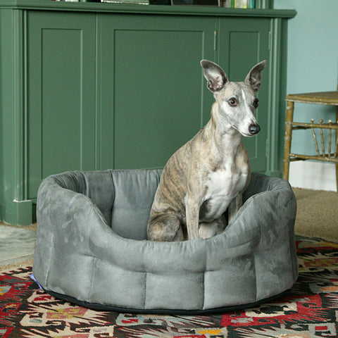 Whippet in a P&L Superior Pet Beds Premium Oval Faux Suede Softee Bed
