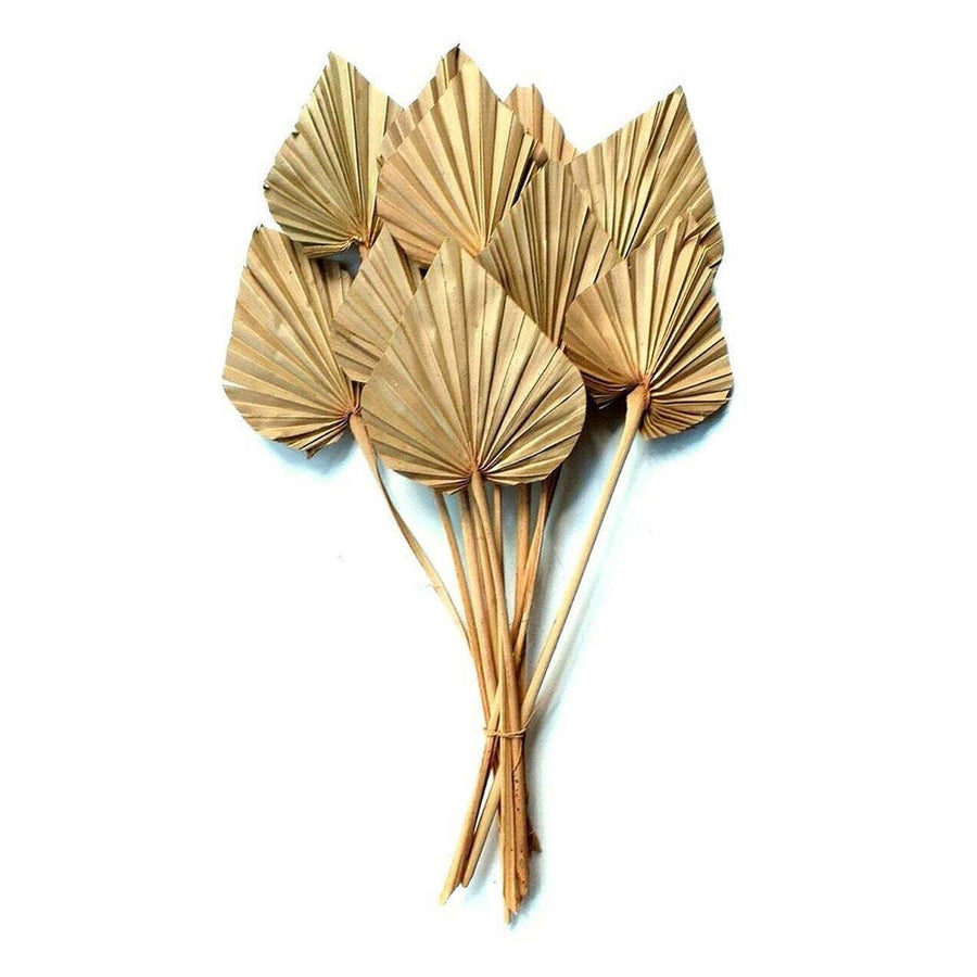 Dried Sunspear
