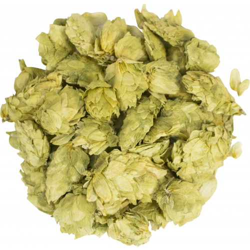 Whole Cone Willamette Hops - 2 oz