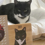 PETure Perfect Cat Illustration Subscription Box