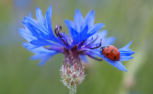 5 Easy Ways to Help Ladybugs Feel More at Home  in Your Vegetable Garden