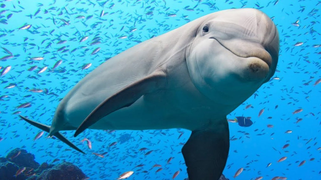 Dolphin Spirit Animal Meaning & Significance | Medicine Yoga