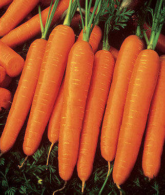Organic Carrot Seeds (200 pcs)