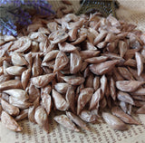 Cedrus Deodara Seeds (10 pcs/bag)